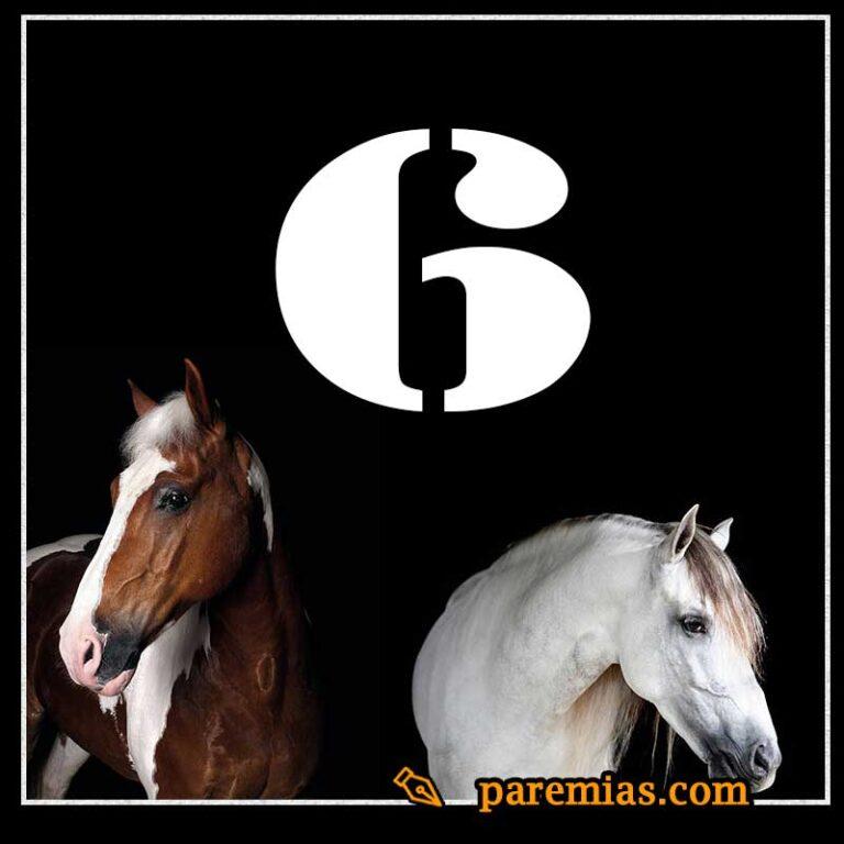 6 refranes mexicanos sobre el caballo