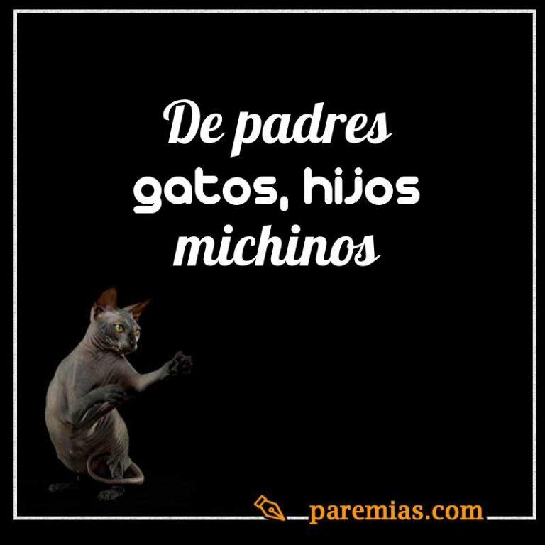 De padres gatos, hijos michinos
