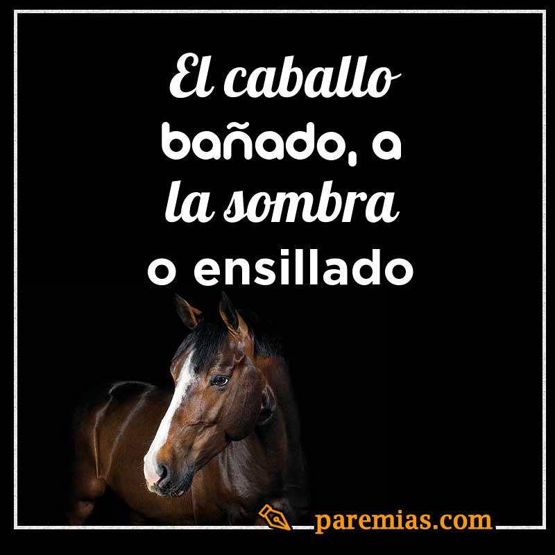 El caballo bañado, a la sombra o ensillado