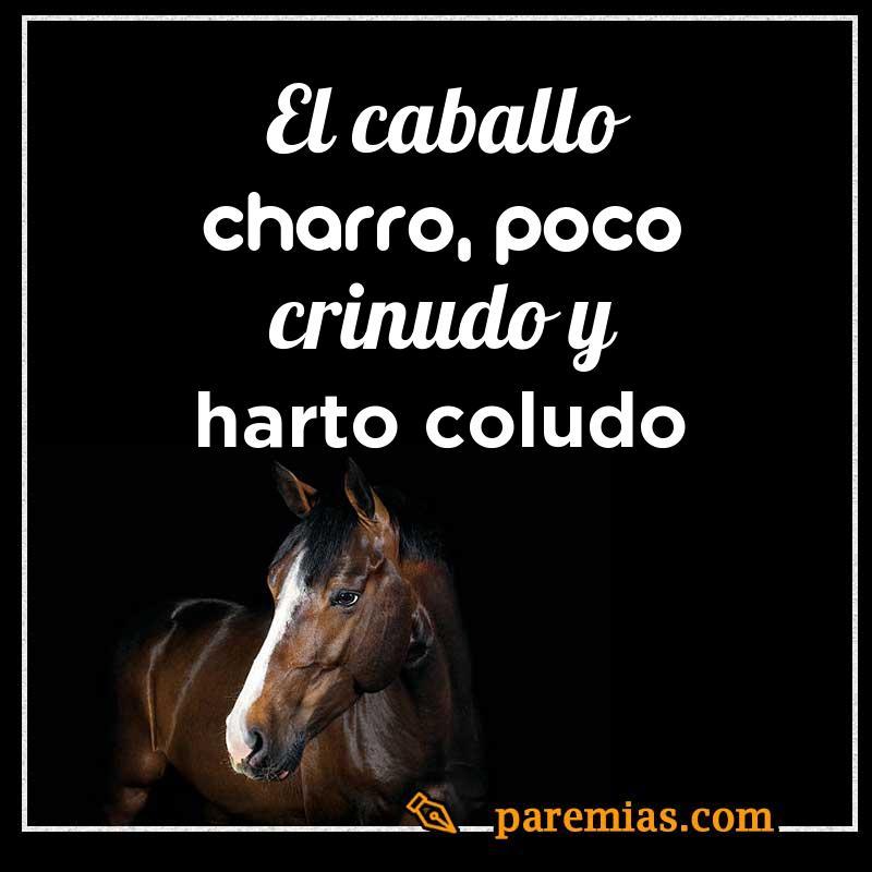 El caballo charro, poco crinudo y harto coludo