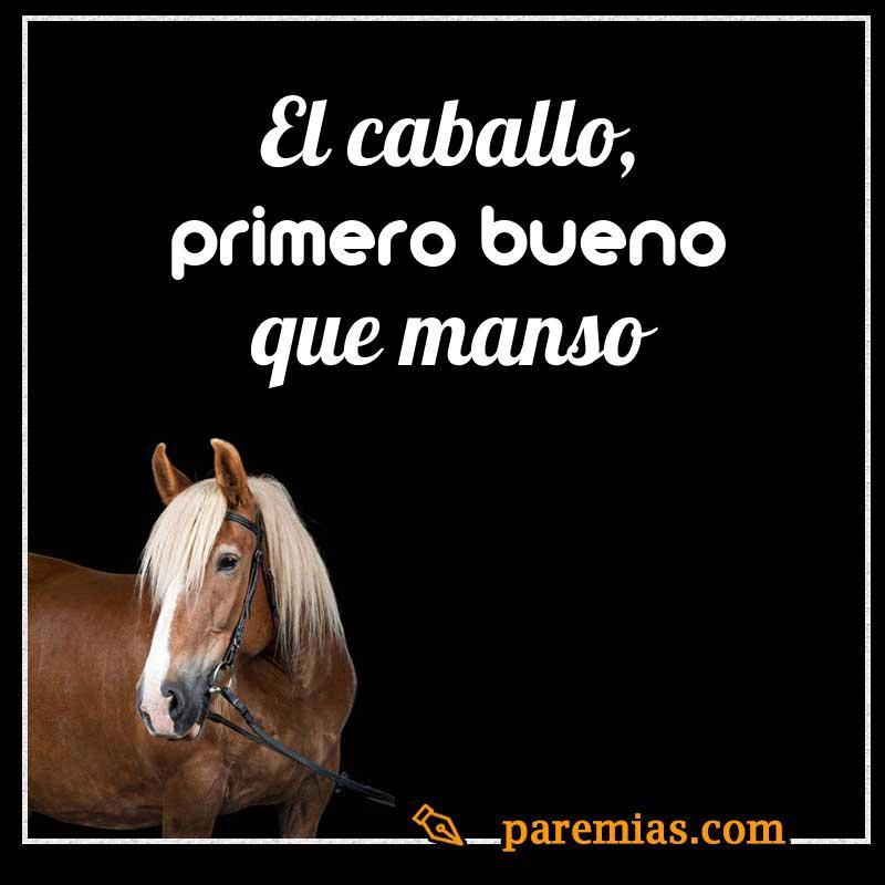 El caballo, primero bueno que manso
