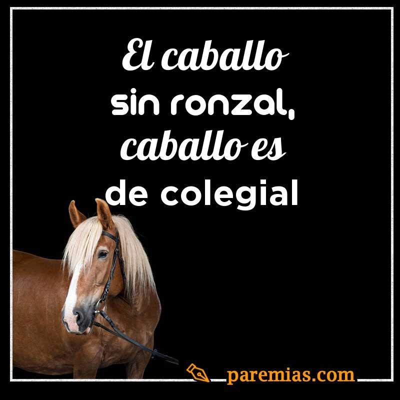 El caballo sin ronzal, caballo es de colegial