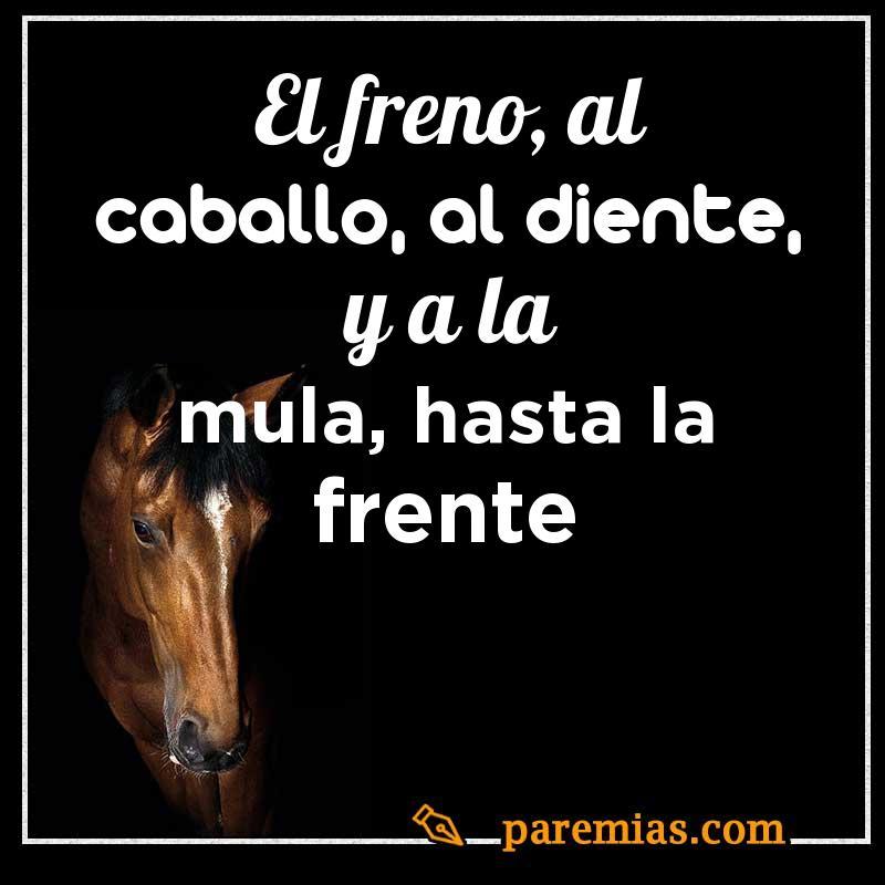 El freno, al caballo, al diente, y a la mula, hasta la frente
