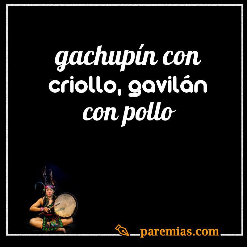 Gachupín con criollo, gavilán con pollo
